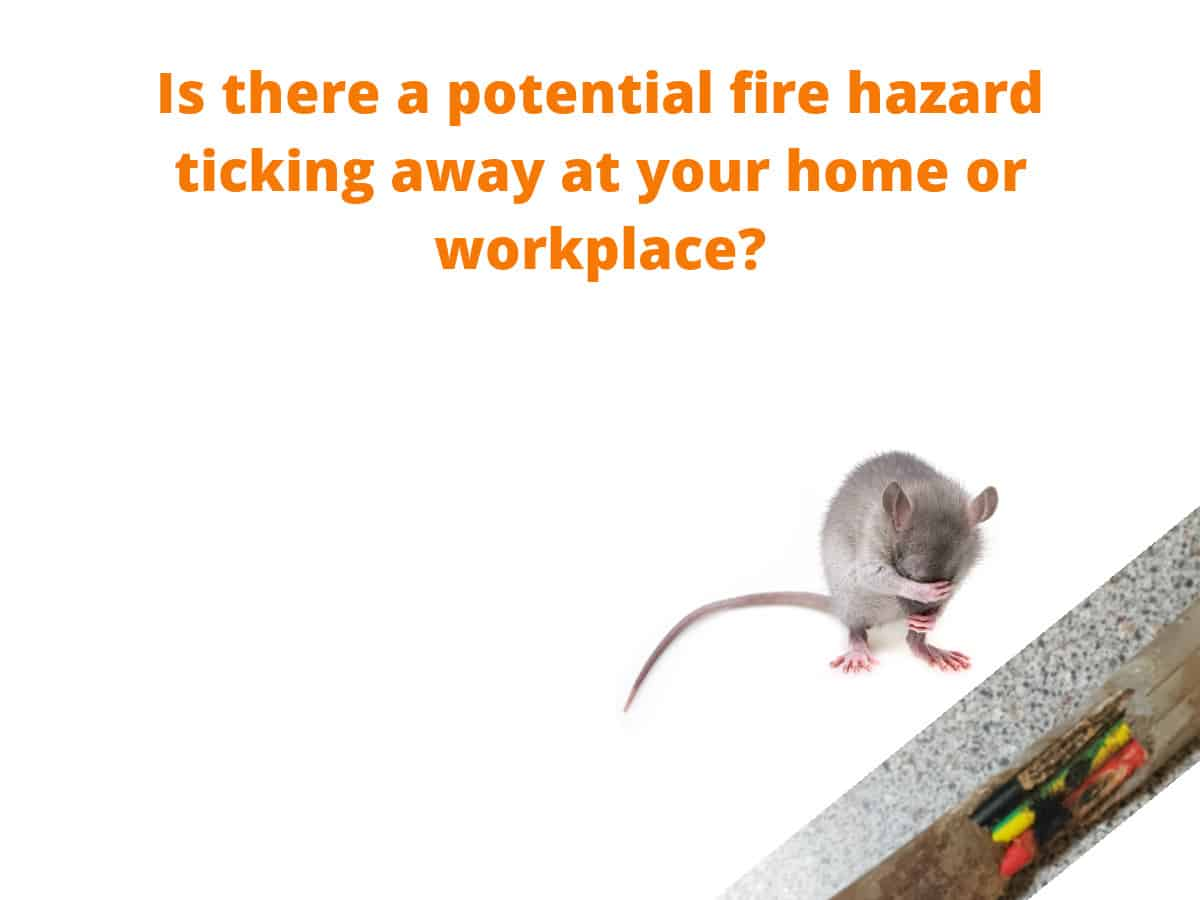 Warning Safety Message Damaged Wiring Caused By Rodents Or Money Possums
